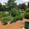 Woodmont_Garden